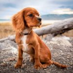 adorable chien de chasse